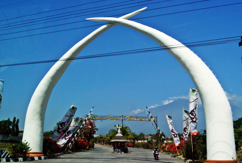 Pasuruan Indonesia  city photos : Sekilas Tentang Taman Safari Indonesia II | Lingkar Pandaan